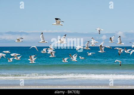 Bay of Islands, seagulls flying over sea - Stock Photo