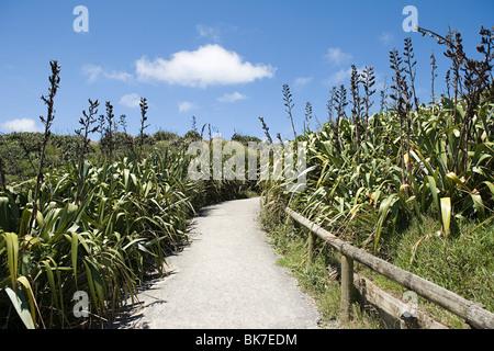 Auckland, path on Muriwai Beach - Stock Photo