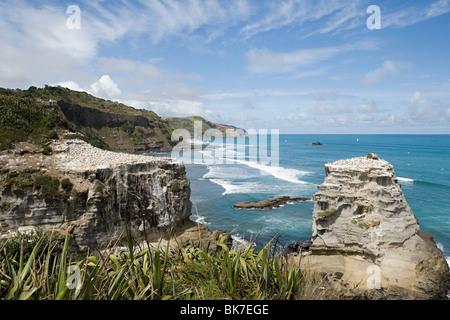 Auckland, coast with gannet rocks at Muriwai Beach - Stock Photo
