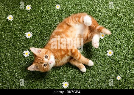 Kitten lying on grass - Stock Photo