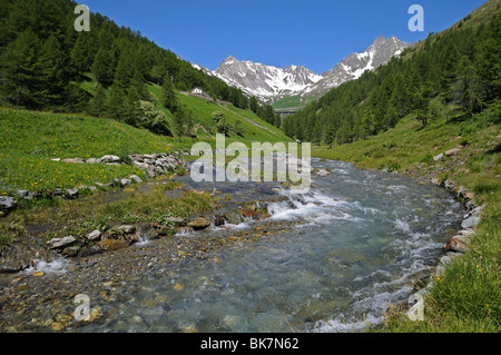 Spring flowers and alpine stream in Valle del Gran San Bernardo on way to Great St Bernard pass from Aosta Italy - Stock Photo