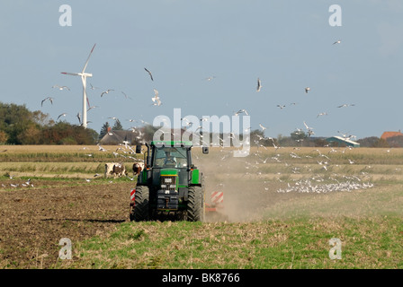 Farmer plowing a field which has attracted a flock of seagull, Pellworm, North Friesland District, Schleswig-Holstein, - Stock Photo