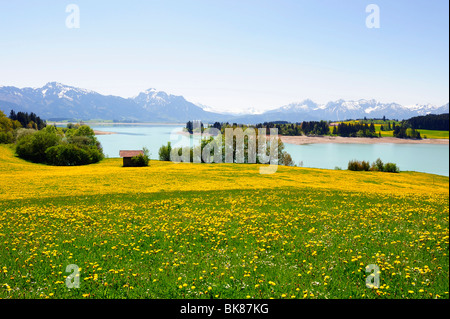 Forggensee Lake near Fuessen, East Allgaeu, Allgaeu, Bavaria, Germany, Europe - Stock Photo