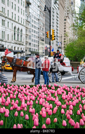 NEW YORK, NY - Tulips and carriages in New York's Central Park in the spring. - Stock Photo