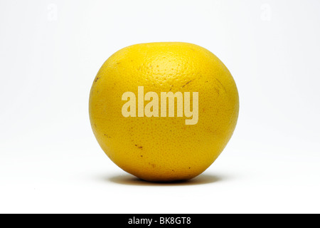 Red grapefruit (Citrus paradisi) - Stock Photo