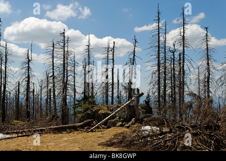 Forest damage at Rachel mountain, Nationalpark Bayerischer Wald, National Park Bavarian Forest, Lower Bavaria, Bavaria, - Stock Photo