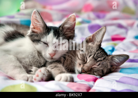 Close-up of two kittens resting on the bed - Stock Photo