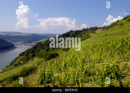 View from Beulsberg mountain near Urbar over a vineyard towards the town of Oberwesel, a town of towers and wine, - Stock Photo