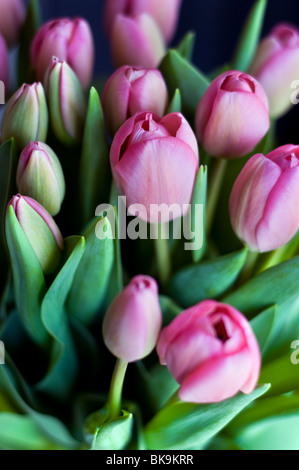 A bunch of pink tulips - Stock Photo