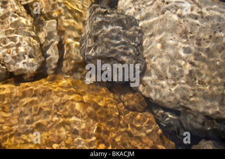 Rocks underwater in dappled sunlight, Grotto Creek, Grotto Creek, Grotto Canyon, Bow Valley, Alberta, Canada - Stock Photo