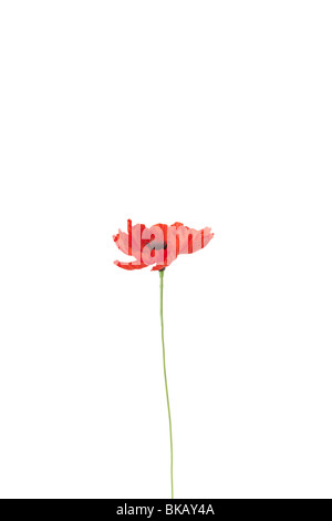 An artificial poppy flower. - Stock Photo