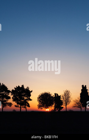Line of silhouette trees in the English countryside at sunrise - Stock Photo