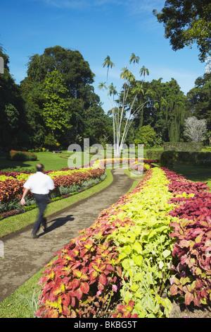 Flower garden in Peradeniya Botanic Gardens, Kandy, Sri Lanka - Stock Photo