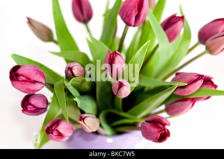A vase of purple tulips on a white background - Stock Photo
