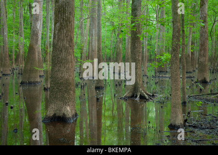 old-growth bottomland forest, Congaree National Park, South Carolina - Stock Photo