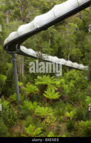 Adventure Slide, Tarkine Forest Adventures (ex Dismal Swamp), Bass Highway, North Western Tasmania, Australia - Stock Photo