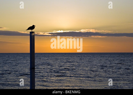 Silhouette of seagull at beach during sunset, Brighton, UK. JPH0268 - Stock Photo