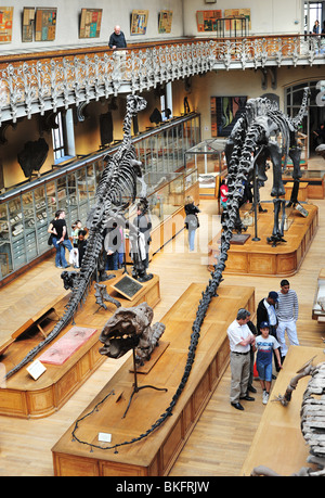 natural history museum in Paris, Grande Galerie de l'Évolution in Jardin des Plantes - Stock Photo