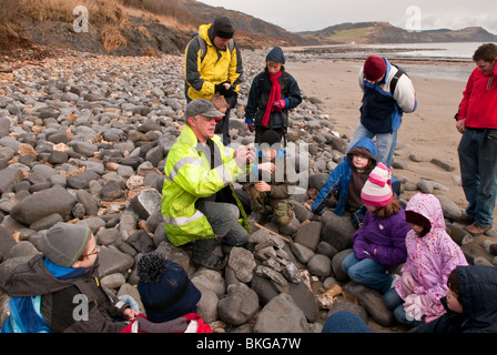 Fossil Hunting on Lyme Regis Beach on the Jurassic Coast Dorset UK - Stock Photo