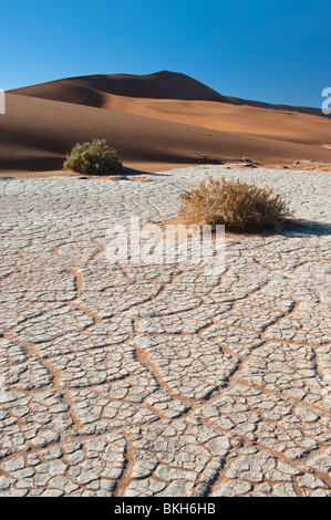 Dry River Bed Leaving a Craquelure Effect in the White Clay by Big Daddy Dune in Sossusvlei, Namibia - Stock Photo