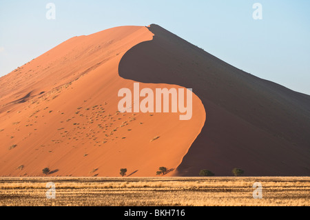 Strong Morning Sun Casts Shadows on Dune 45 in Sossusvlei, Namibia