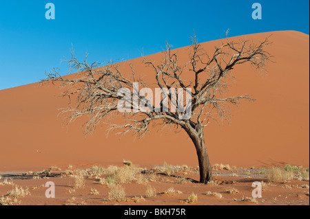 Dune 45 in Sossusvlei, Namibia - Stock Photo