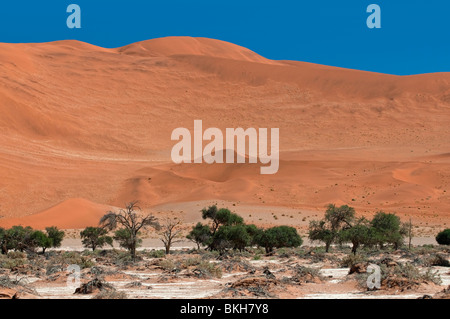 Big Mama Dune in Sossusvlei one of the HIghest Dunes in the World, Namibia