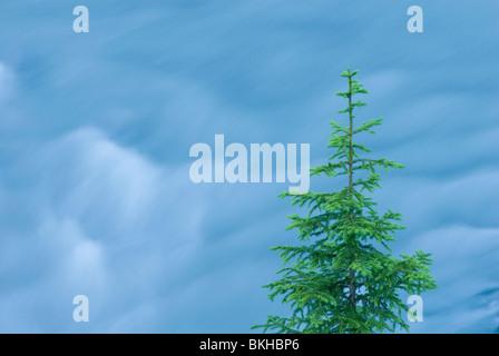 Norway spruce and flowing glacier water; fijnspar en stromend gletscher water; - Stock Photo