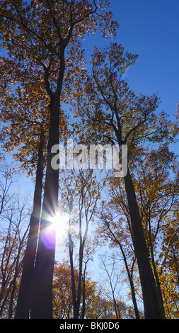 Inspirational sunburst shining through quiet fall foliage. Sun ray through trees. - Stock Photo