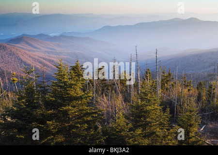 Great Smoky Mountains National Park; Fraser Fir Trees Viewed From Clingman's Dome - Stock Photo
