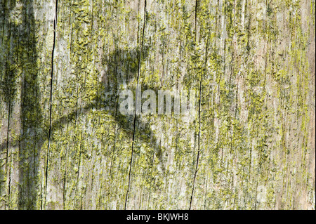 Sunlight casting a plant leaf shadow on an old wooden post in a garden - Stock Photo