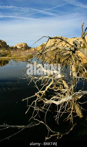 Barker dam Joshua tree National park - Stock Photo