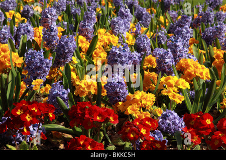 Close up of a planted display of brightly coloured spring flowers - Stock Photo