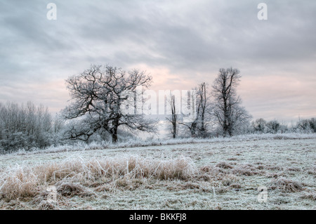 Old oak tree (Quercus) covered in hoar frost with frozen grasses in foreground taken at dawn in Siston in Bristol, - Stock Photo