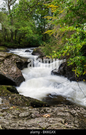 Buchanty Spout waterfall on the River Almond, at Buchanty, B8063 in Perthshire, Scotland, famous for viewing leaping - Stock Photo
