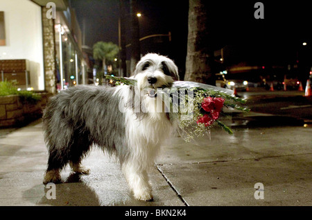 THE SHAGGY DOG (2006) CREDIT DISNEY SHGG 001-02 - Stock Photo