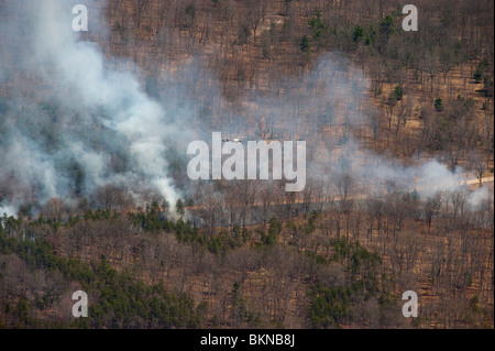 2000 acre prescribed burn on the Huron-Manistee National Forest in Michigan USA, by Jeff Wickett/Dembinsky Photo - Stock Photo