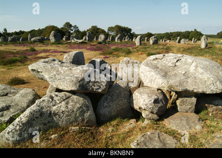 The alignments at CARNAC – rows of 2000 or so menhirs, or standing stones, stretching for over 4km to the north - Stock Photo
