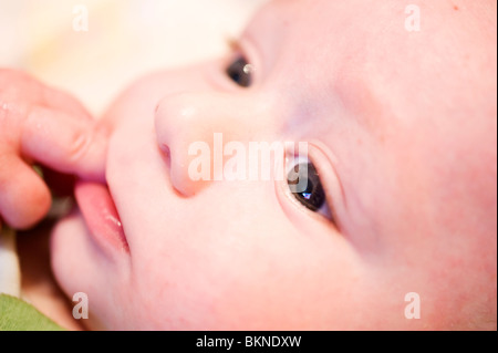 5 month old baby close up on face chewing fingers - Stock Photo