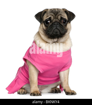 Pug dressed in pink, 7 months old, sitting in front of white background - Stock Photo