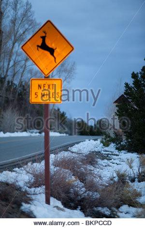 Deer Crossing Sign, Great Sand Dunes National Park, Colorado - Stock Photo