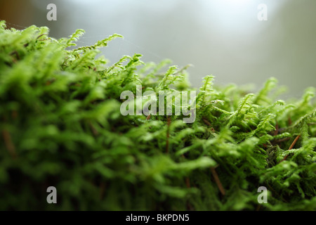 Mossy tree branch in woods - Stock Photo