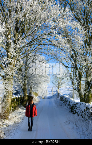 Wales, Snowdonia. Walking down a snowy farm track with hoar frost on the trees. (MR) - Stock Photo