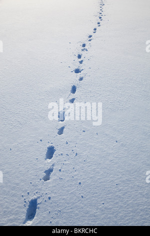 Dog tracks on fresh new snow at Winter - Stock Photo