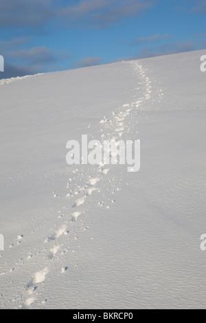Dog tracks on snow at hillside - Stock Photo
