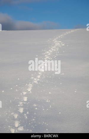 Dog tracks on snow - Stock Photo