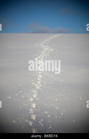 Dog tracks on snow at hillside - Stock Photo