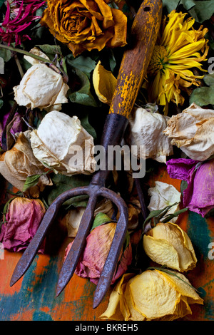 Garden tool and old roses - Stock Photo