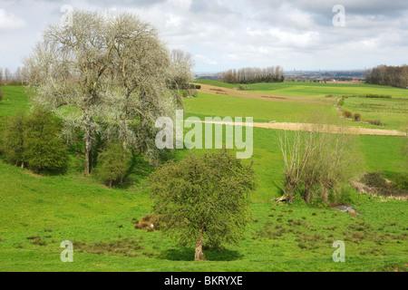 Bocagelandschap met hagen en bomen, Westvlaamse Heuvels, Scherpenberg, België Bocage landscape with hedges and - Stock Photo