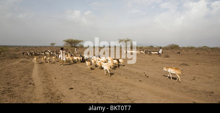 adult afar afari Africa africa African afrikaans agricultural agriculture anarchy animal animals armed arms army - Stock Photo